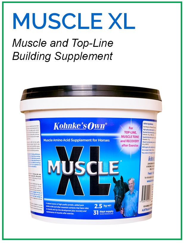 Supplement for Muscle Health